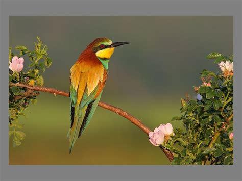 beautifuls birds beautiful nature photo  fanpop