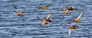 Migratory Bird Habitat Initiative sheds light on critical ...