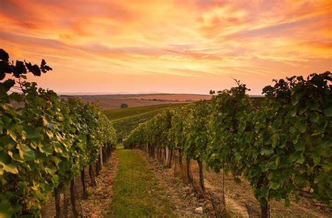 22 of Australia's Best Winery Experiences | Travel Insider