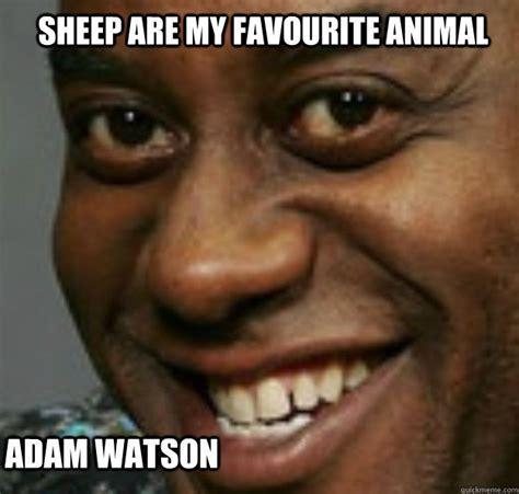 Ainsley Memes - sheep are my favourite animal adam watson ainsley harriott quickmeme