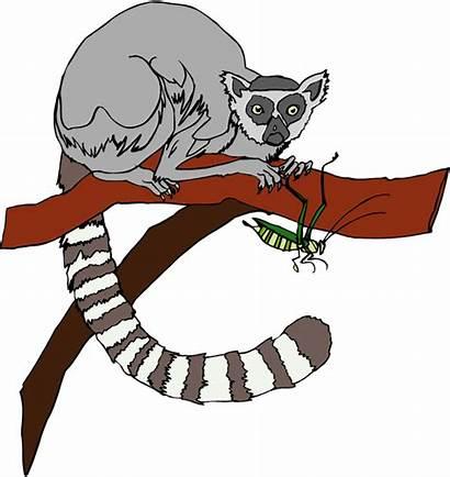 Lemur Clipart Clip Lemurs Animals Cliparts Madagascar