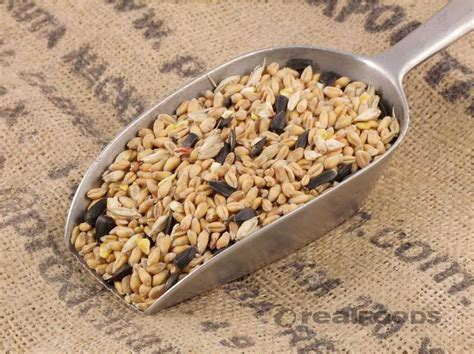 wild bird food from real foods buy bulk wholesale online