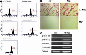 Characterization Of Adipose Tissue