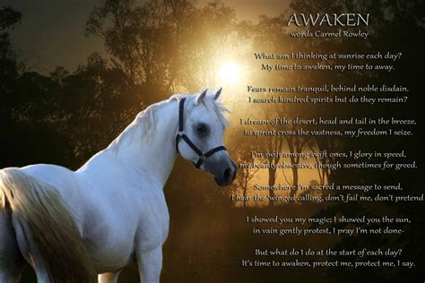 horse horses quotes poems arabian sayings heaven quote carmelrowley dreams sunday awaken quotesgram noble