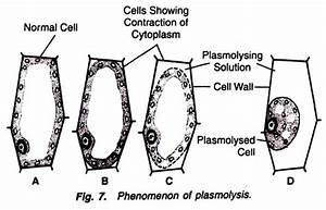Experiment On Plasmolysis  With Diagram