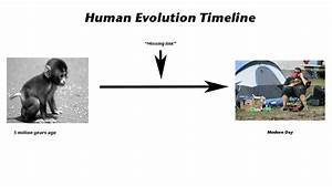 Whale Evolution Timeline Human Pictures
