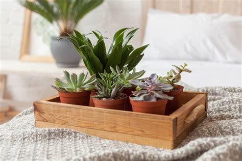 Plants In Bedroom by 8 Bedroom Plants To Improve Your Sleep Matter Of Trust