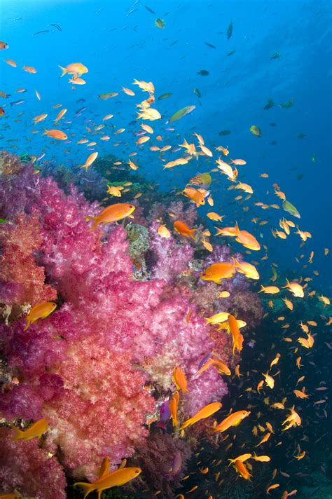 Underwater Pictures - Images of The Underwater World for ...