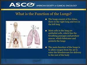 Ppt - Plwc Slide Deck Series  Understanding Lung Cancer Powerpoint Presentation