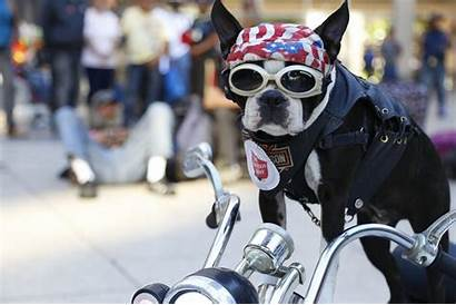 Dog Biker Chopper Certification Therapy Costume