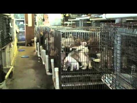 de donde vienen los perros de las tiendas de mascotas