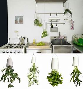 Inverted Indoor Planter for Hanging Plants Upside-Down