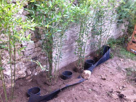 comment planter ses bambous dans les r 232 gles de l sans 234 tre envahi