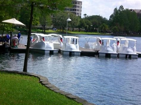 Paddle Boats Orlando Florida by Swan Paddle Boats Picture Of Lake Eola Park Orlando