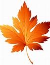 Image result for Fall leaves Clip Art