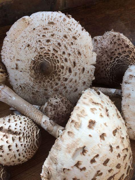 mushrooms stuffed cheese