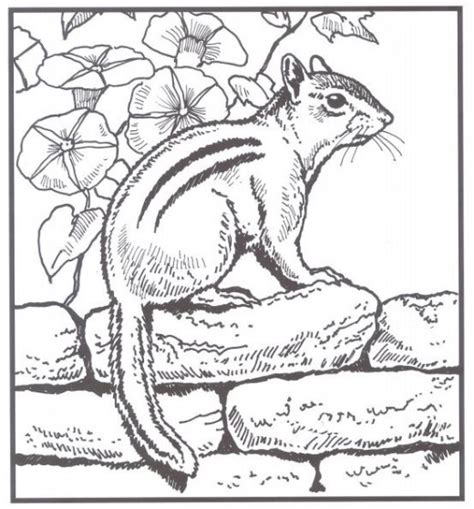nature scenes coloring pages  adults coloring pages