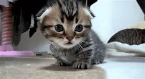 Lustige katzenbilder kostenlos