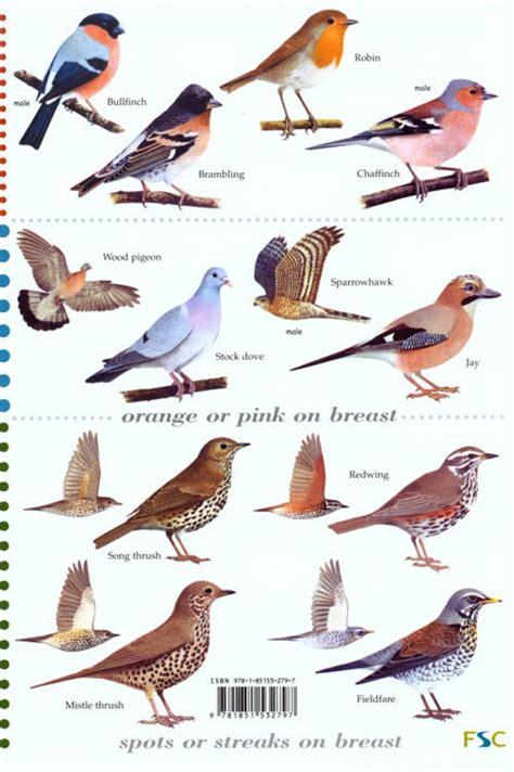 guide to the top 50 garden birds edward jackson andrew