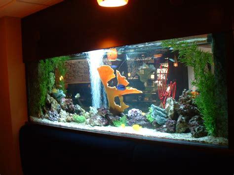 living color aquarium 28 images aquariums gallery living color aquariums aquariums gallery