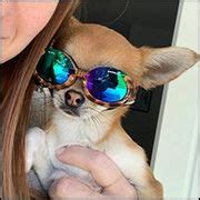 hunde sonnenbrillenhundebrillenhunde brillehunde brille