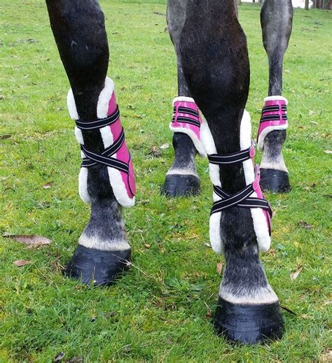 boots tendon jumping horse horses patent equitation leg jump touch perfect ponies colour some english fronted open legs pony bizdebeles