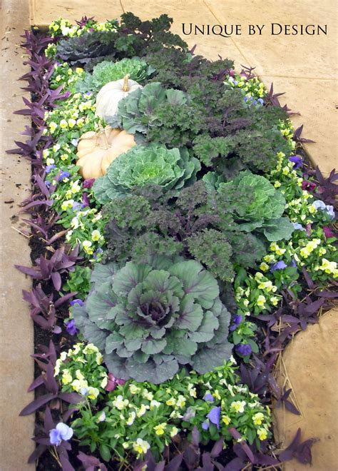 decorative cabbage and kale ornamental cabbage and kale fun yard pinterest