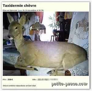 Leboncoin Haut Normandie : animaux a vendre bon coin ~ Gottalentnigeria.com Avis de Voitures