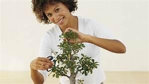 Bonsai Baum Schneiden : bonsai schneiden die wichtigsten tipps hobby bonsai bonsai baum und asiatischer garten ~ Frokenaadalensverden.com Haus und Dekorationen