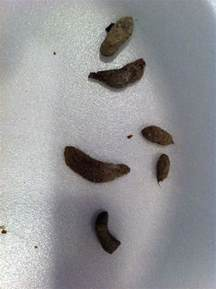 What Does Rat Droppings Look Like
