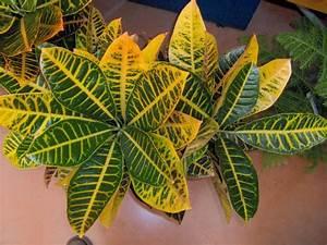 Plante Tropicale D Intérieur : plantes tropicales int rieur photos de magnolisafleur ~ Melissatoandfro.com Idées de Décoration