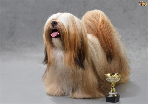 dog breeds  boast  easy  groom petshomes