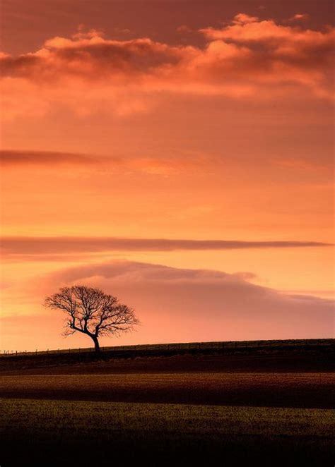 lonely nature  sunset pictures   images