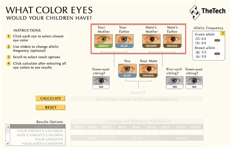 eye color calculator with grandparents baby eye color calculator eye color predictor