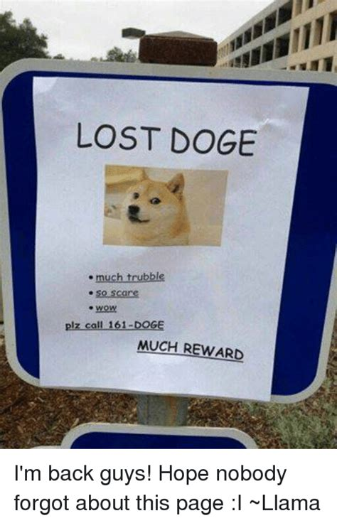 Lost Doge Meme - lost doge much trubble so scare wow plz call 161 doge much reward i m back guys hope nobody