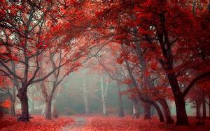 Landscape, Nature, Park, Leaves, Road, Fall, Trees, Mist ...
