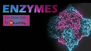 Enzymes  History Of Enzymes - 01 For Class 11th And Aipmt