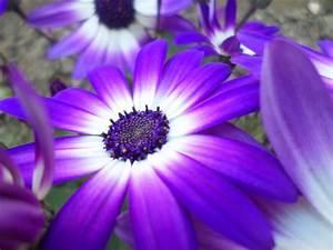 Light purple flower by Fiction-Art-X on DeviantArt