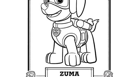 paw patrol coloring pages zuma coloring page