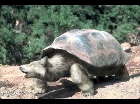 Amazing Morphed Animals Photoshop Weirdness YouTube