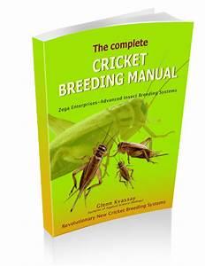 Breeding Crickets Guide Clickbank  U2013 Wild Life How To