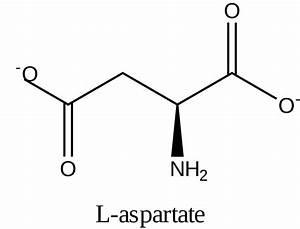 File L-aspartate  Dma  Svg
