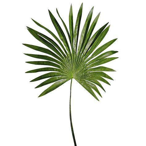 feuille de palmier deco d 233 co feuille de palmier nain 80 cm verte d 233 coration chez decowoerner