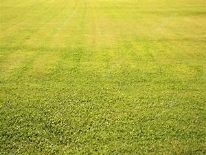 Green grass field seamless background texture — Stock ...