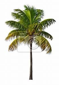 Palme Schwarz Weiß : palme isoliert auf wei em hintergrund fototapete fototapeten dattelpalme sch ne immergr n ~ Eleganceandgraceweddings.com Haus und Dekorationen