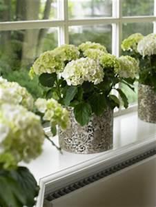 Hortensien Pflege Balkon : hortensien im fr hjahr hortensien pflanzen und ~ Lizthompson.info Haus und Dekorationen