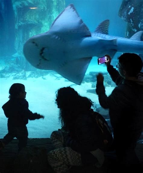 sea aquarium vouchers sea centre discount vouchers 2 for 1 offers birmingham topdogdays