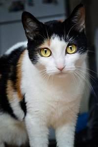 17 Best images about Cat Portraits on Pinterest   Orange ...