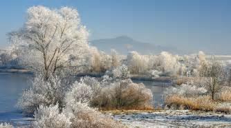 winter trees winter photo 22173878 fanpop