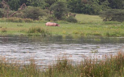 3 Tage Im Murchison Falls Nationalpark Im Nordwesten